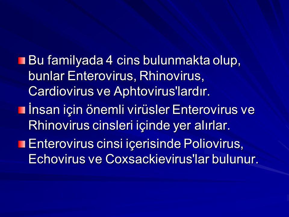 Bu familyada 4 cins bulunmakta olup, bunlar Enterovirus, Rhinovirus, Cardiovirus ve Aphtovirus lardır.