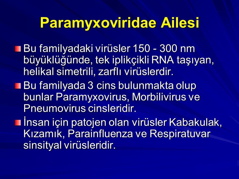 Paramyxoviridae Ailesi