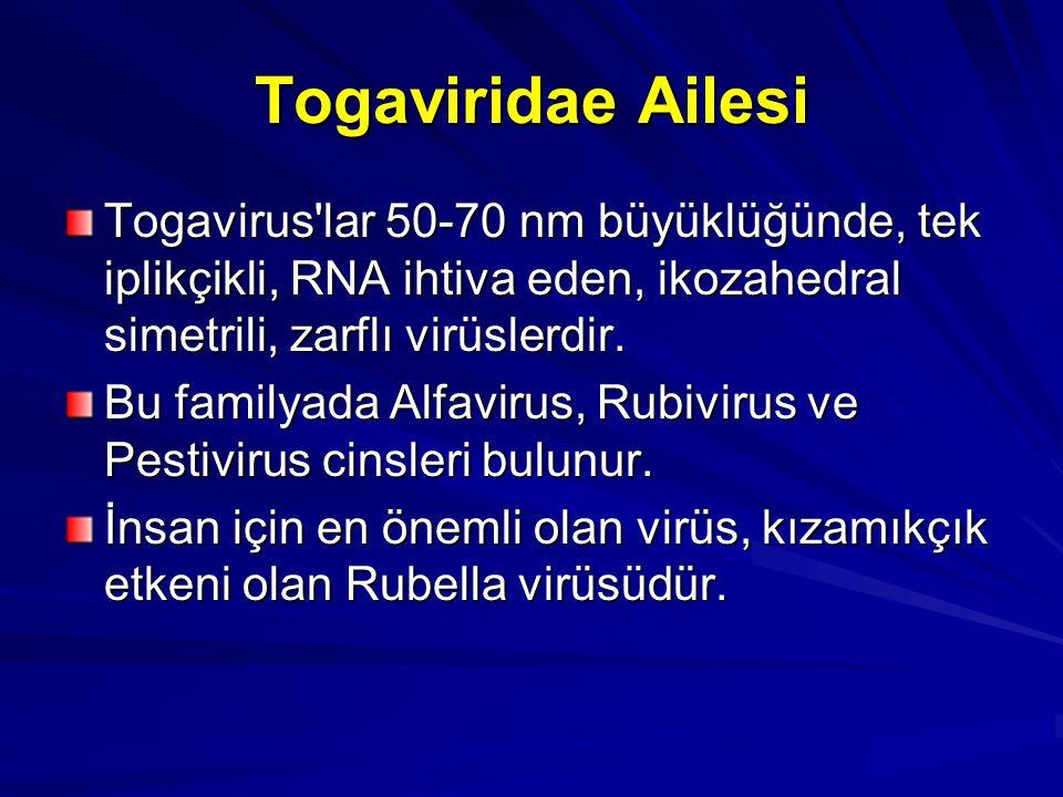 Togaviridae Ailesi Togavirus lar 50-70 nm büyüklüğünde, tek iplikçikli, RNA ihtiva eden, ikozahedral simetrili, zarflı virüslerdir.