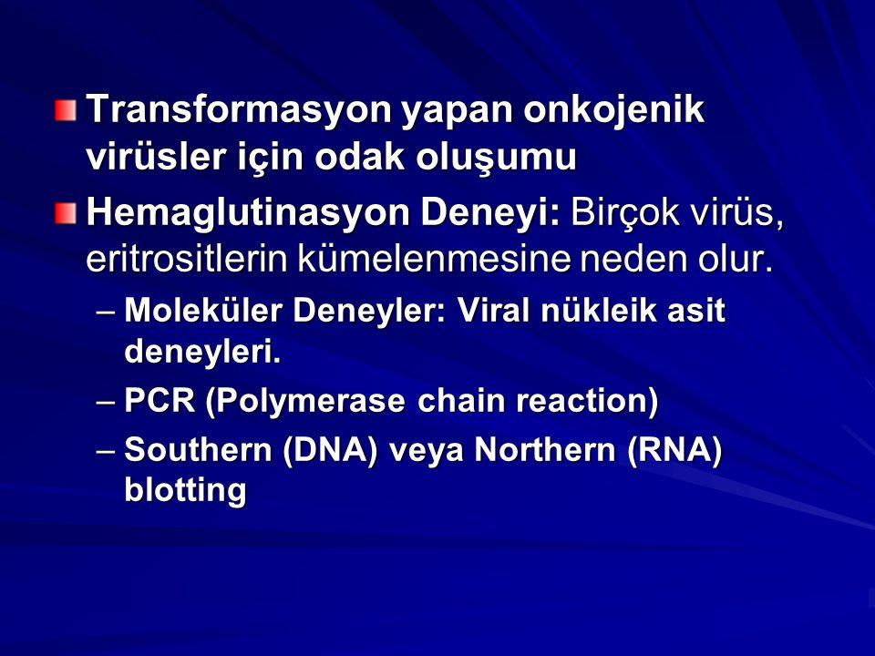 Transformasyon yapan onkojenik virüsler için odak oluşumu