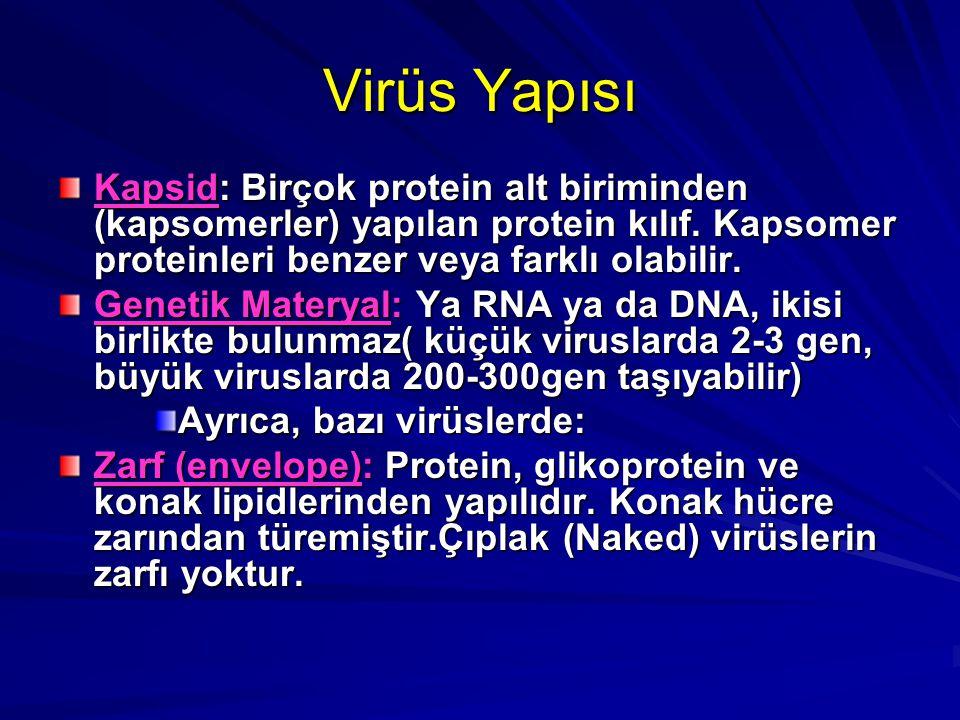 Virüs Yapısı Kapsid: Birçok protein alt biriminden (kapsomerler) yapılan protein kılıf. Kapsomer proteinleri benzer veya farklı olabilir.
