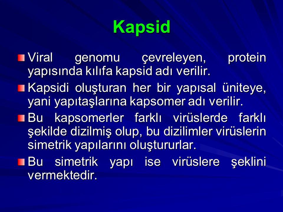 Kapsid Viral genomu çevreleyen, protein yapısında kılıfa kapsid adı verilir.