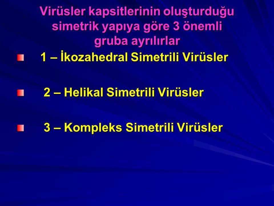 Virüsler kapsitlerinin oluşturduğu simetrik yapıya göre 3 önemli gruba ayrılırlar