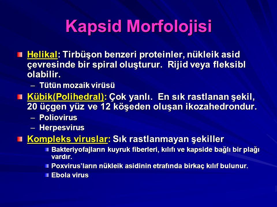 Kapsid Morfolojisi Helikal: Tirbüşon benzeri proteinler, nükleik asid çevresinde bir spiral oluşturur. Rijid veya fleksibl olabilir.