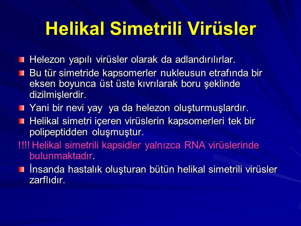 Helikal Simetrili Virüsler