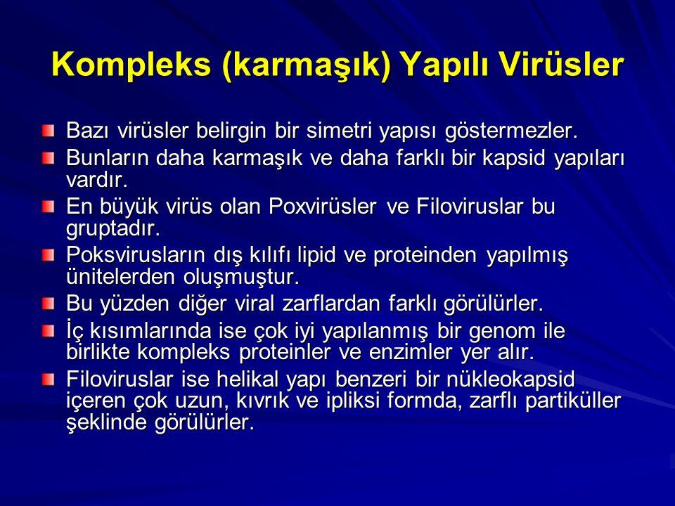 Kompleks (karmaşık) Yapılı Virüsler