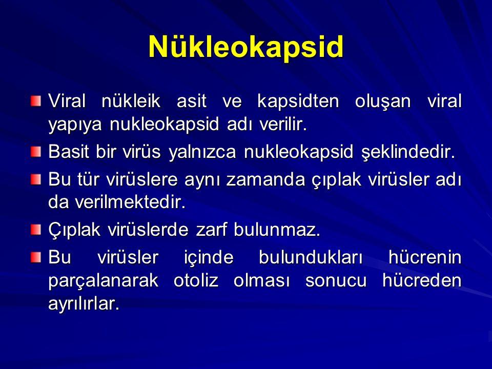 Nükleokapsid Viral nükleik asit ve kapsidten oluşan viral yapıya nukleokapsid adı verilir. Basit bir virüs yalnızca nukleokapsid şeklindedir.