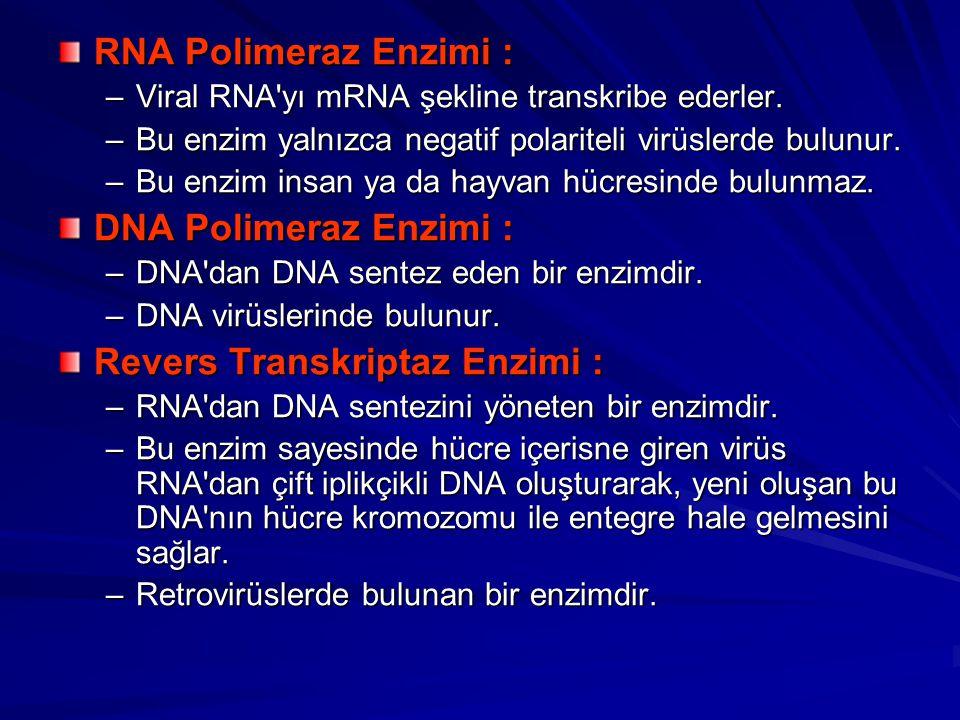 Revers Transkriptaz Enzimi :