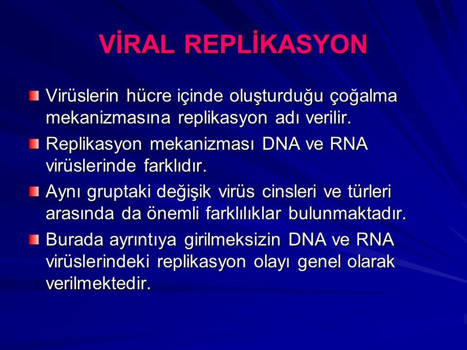 VİRAL REPLİKASYON Virüslerin hücre içinde oluşturduğu çoğalma mekanizmasına replikasyon adı verilir.