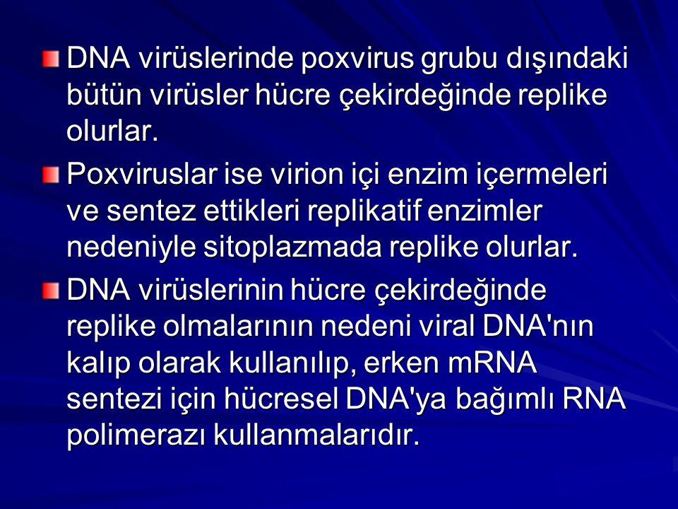 DNA virüslerinde poxvirus grubu dışındaki bütün virüsler hücre çekirdeğinde replike olurlar.