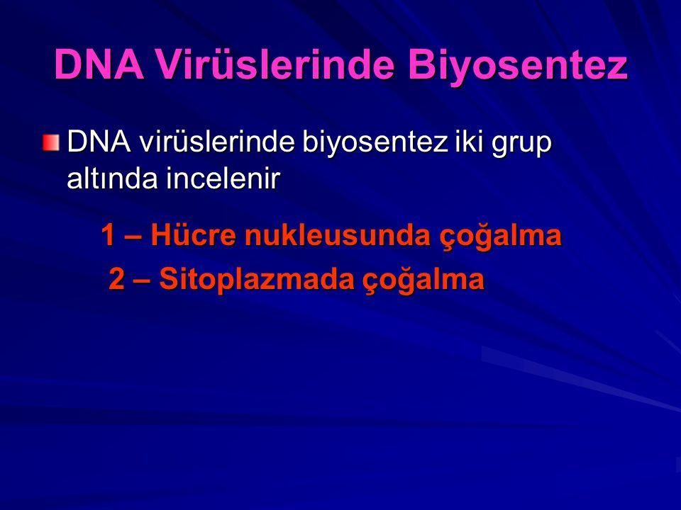 DNA Virüslerinde Biyosentez