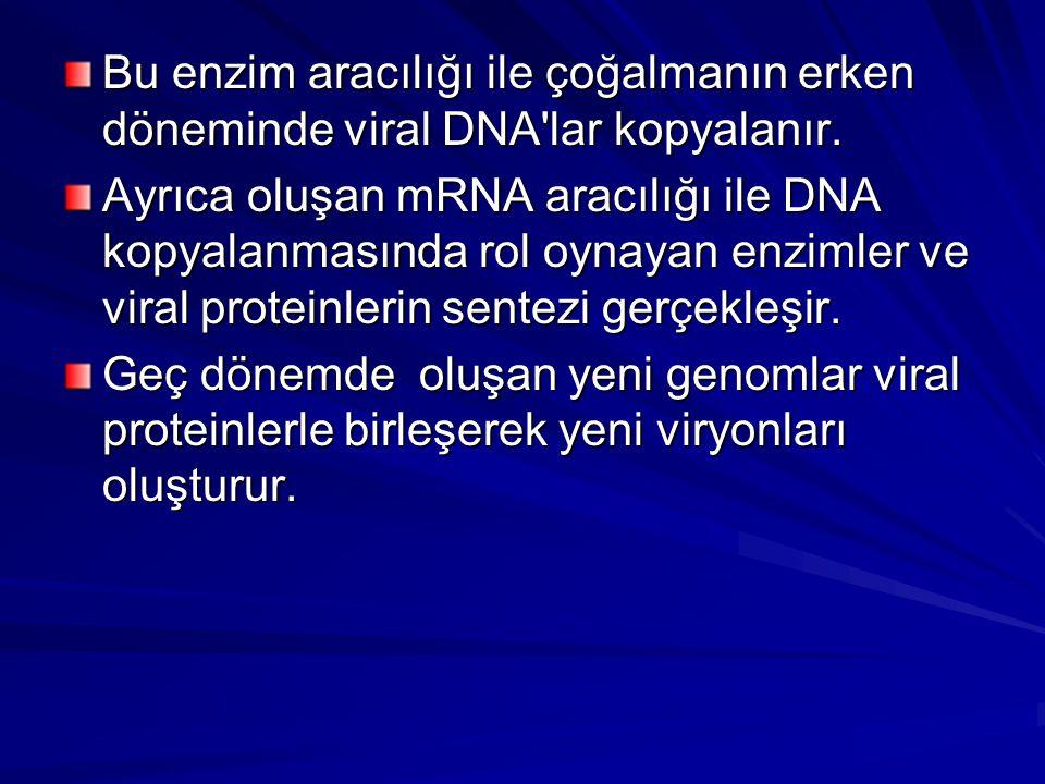 Bu enzim aracılığı ile çoğalmanın erken döneminde viral DNA lar kopyalanır.
