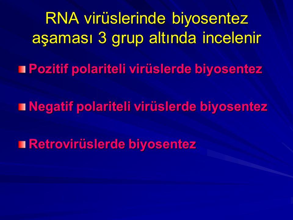 RNA virüslerinde biyosentez aşaması 3 grup altında incelenir
