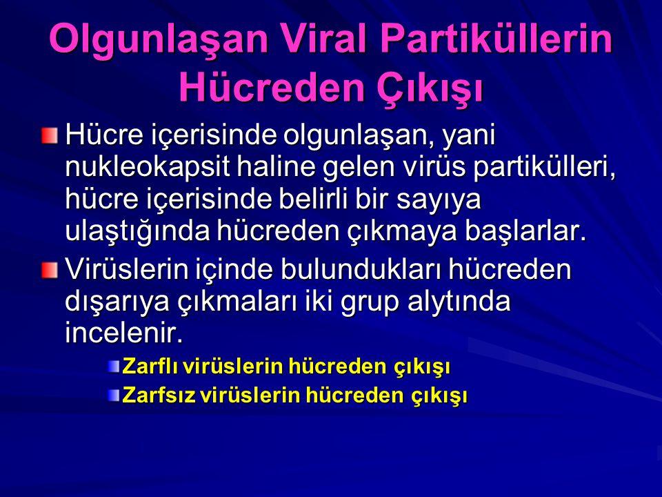 Olgunlaşan Viral Partiküllerin Hücreden Çıkışı