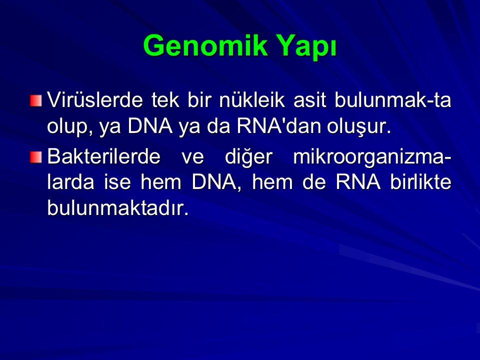 Genomik Yapı Virüslerde tek bir nükleik asit bulunmak-ta olup, ya DNA ya da RNA dan oluşur.
