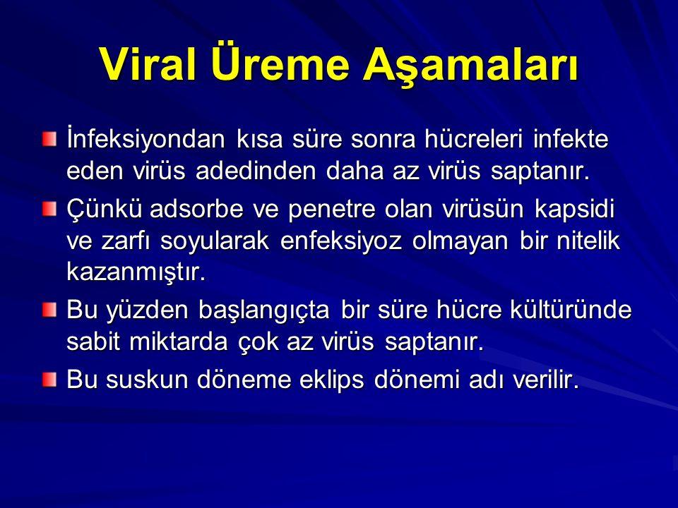 Viral Üreme Aşamaları İnfeksiyondan kısa süre sonra hücreleri infekte eden virüs adedinden daha az virüs saptanır.