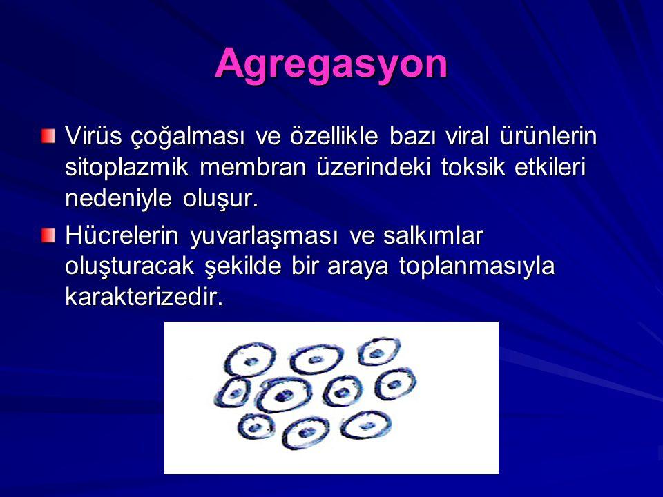 Agregasyon Virüs çoğalması ve özellikle bazı viral ürünlerin sitoplazmik membran üzerindeki toksik etkileri nedeniyle oluşur.