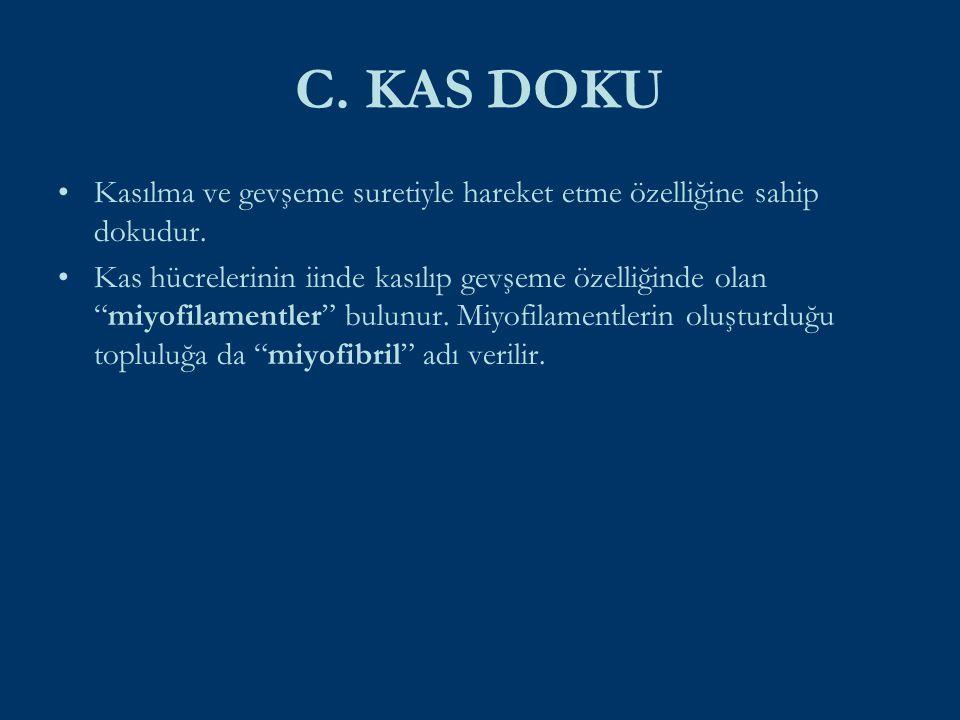 C. KAS DOKU Kasılma ve gevşeme suretiyle hareket etme özelliğine sahip dokudur.