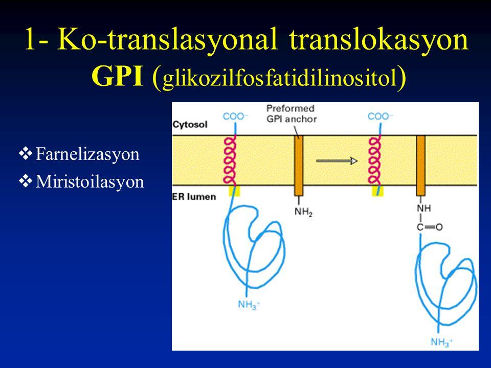 1- Ko-translasyonal translokasyon GPI (glikozilfosfatidilinositol)