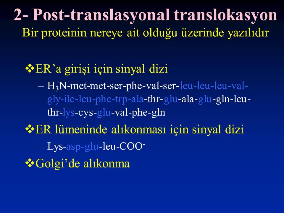 2- Post-translasyonal translokasyon Bir proteinin nereye ait olduğu üzerinde yazılıdır