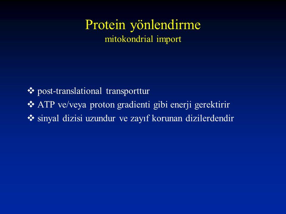 Protein yönlendirme mitokondrial import