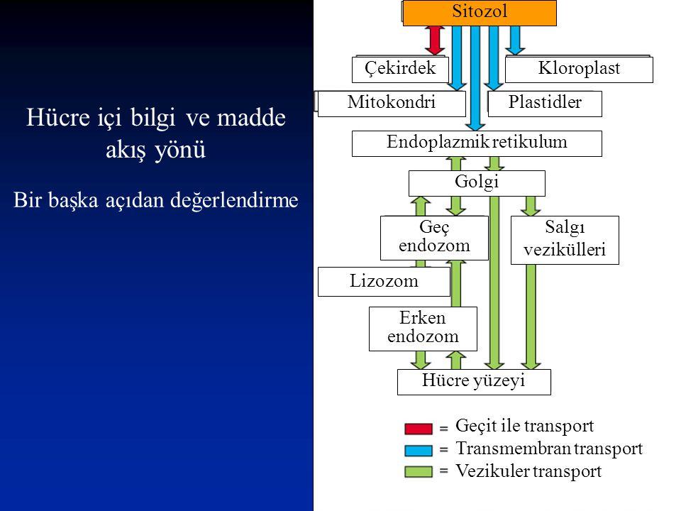 Hücre içi bilgi ve madde akış yönü