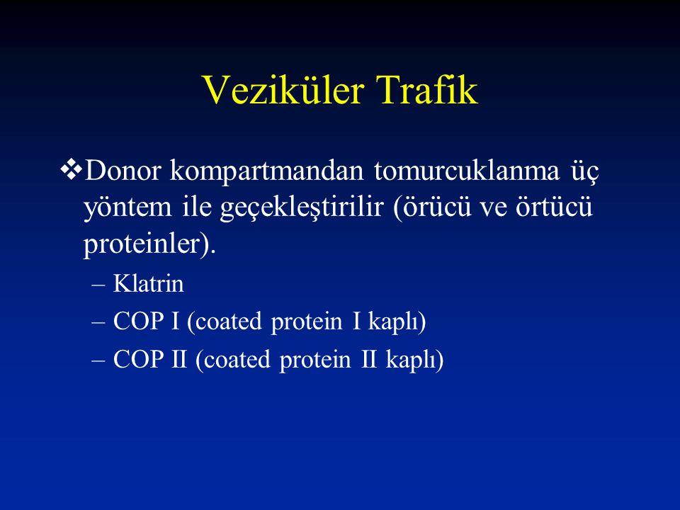 Veziküler Trafik Donor kompartmandan tomurcuklanma üç yöntem ile geçekleştirilir (örücü ve örtücü proteinler).