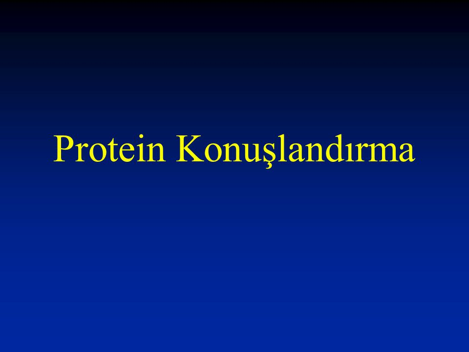 Protein Konuşlandırma