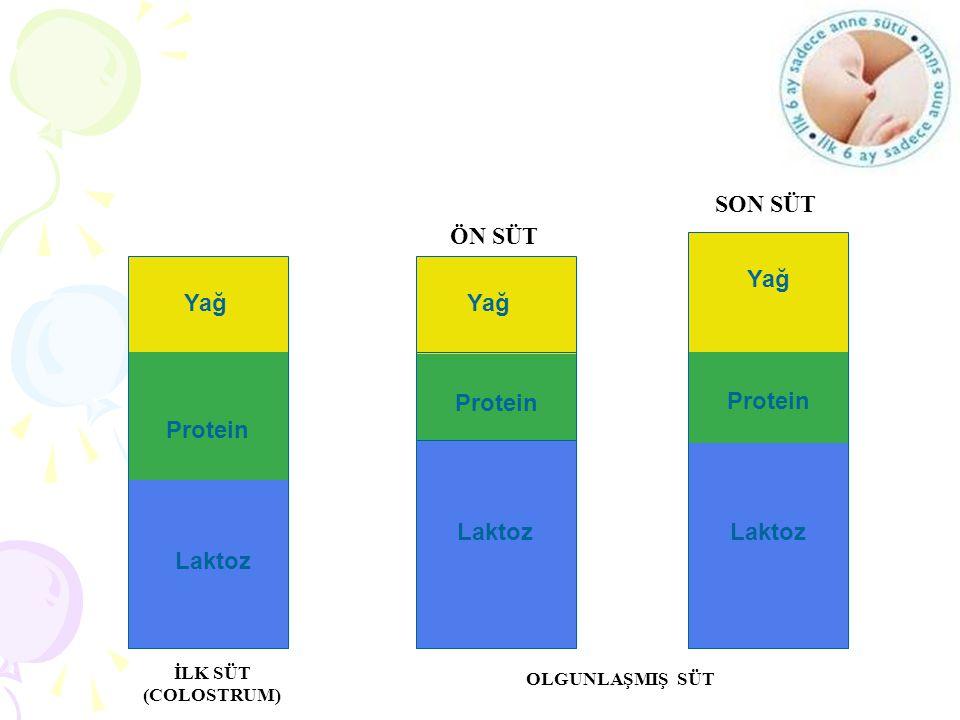 SON SÜT ÖN SÜT Protein Protein Protein Yağ Yağ Yağ Laktoz Laktoz