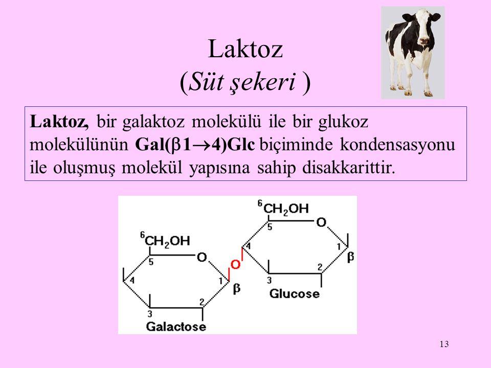 Laktoz (Süt şekeri )