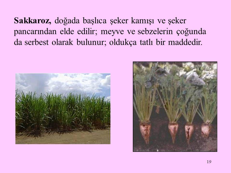 Sakkaroz, doğada başlıca şeker kamışı ve şeker pancarından elde edilir; meyve ve sebzelerin çoğunda da serbest olarak bulunur; oldukça tatlı bir maddedir.