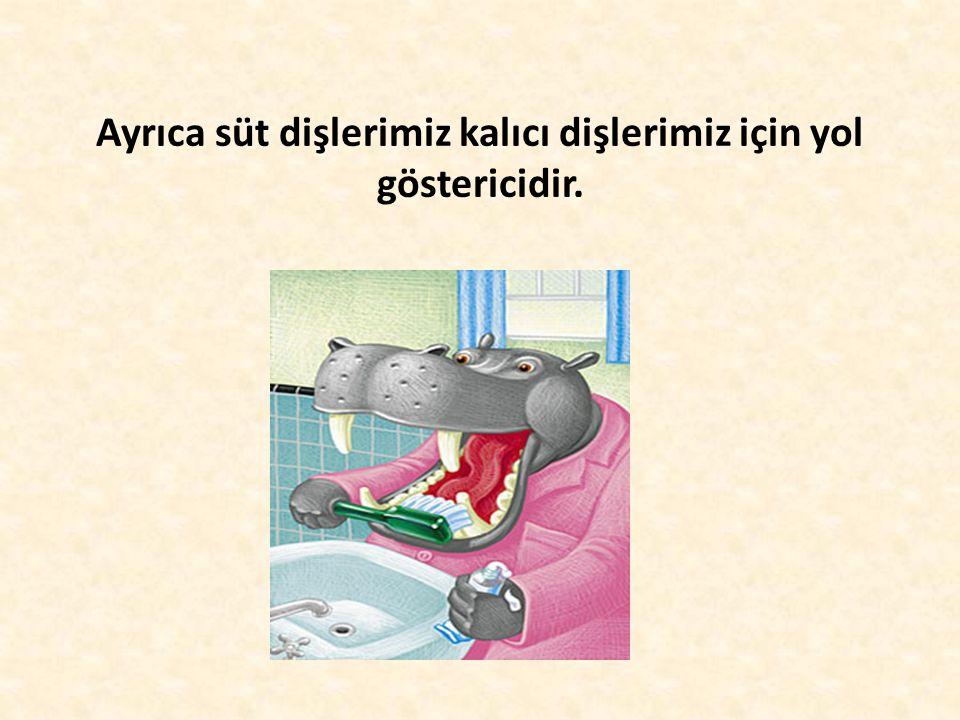 Ayrıca süt dişlerimiz kalıcı dişlerimiz için yol göstericidir.