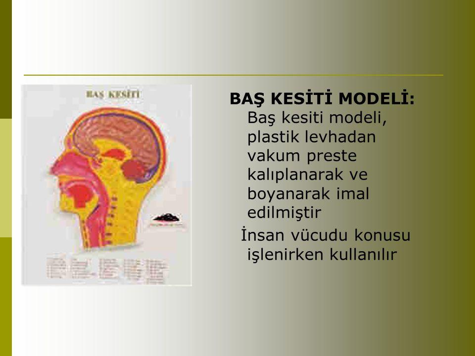 BAŞ KESİTİ MODELİ: Baş kesiti modeli, plastik levhadan vakum preste kalıplanarak ve boyanarak imal edilmiştir