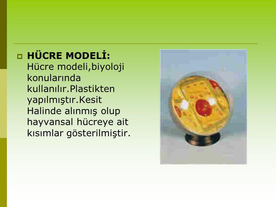 HÜCRE MODELİ: Hücre modeli,biyoloji konularında kullanılır