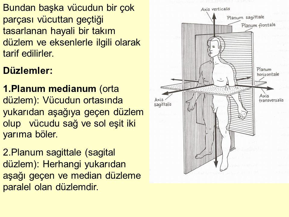 Bundan başka vücudun bir çok parçası vücuttan geçtiği tasarlanan hayali bir takım düzlem ve eksenlerle ilgili olarak tarif edilirler.