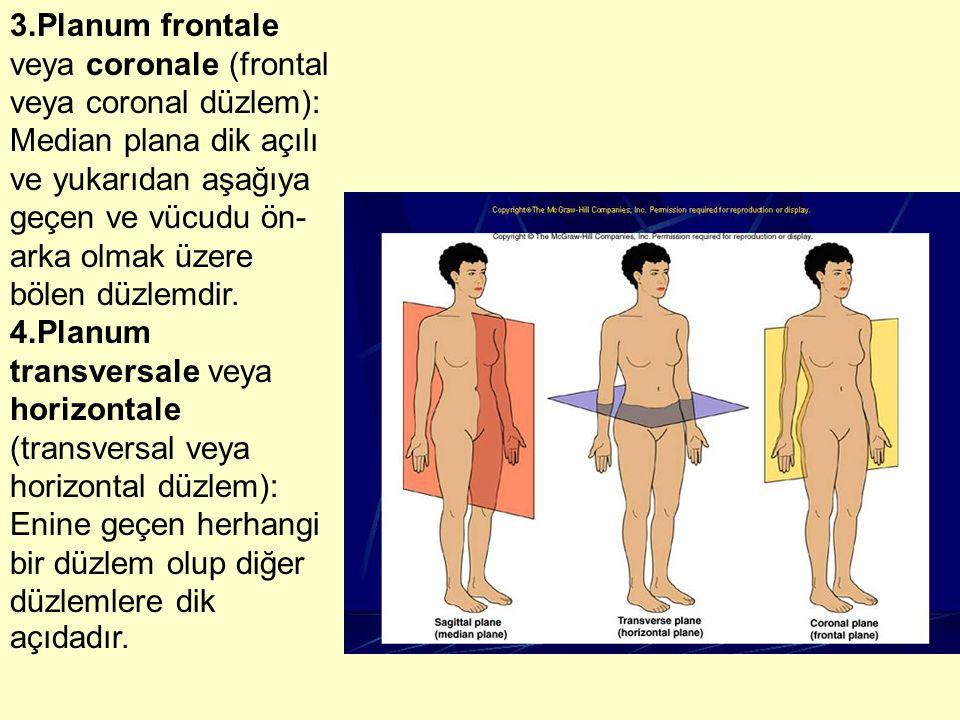 3.Planum frontale veya coronale (frontal veya coronal düzlem): Median plana dik açılı ve yukarıdan aşağıya geçen ve vücudu ön-arka olmak üzere bölen düzlemdir.