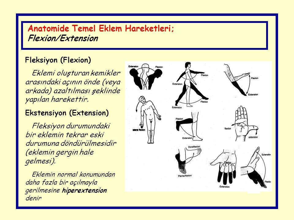 Anatomide Temel Eklem Hareketleri; Flexion/Extension