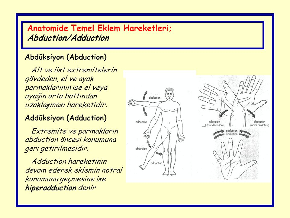 Anatomide Temel Eklem Hareketleri; Abduction/Adduction