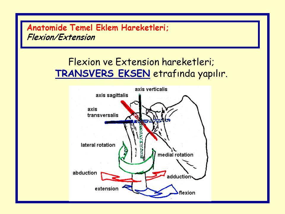 Flexion ve Extension hareketleri; TRANSVERS EKSEN etrafında yapılır.
