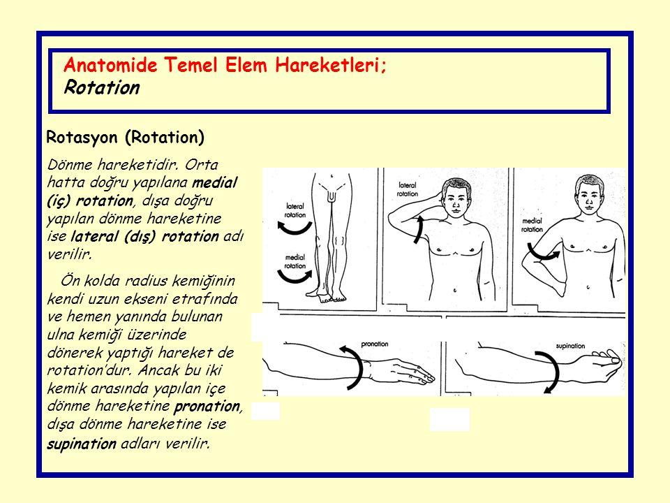 Anatomide Temel Elem Hareketleri; Rotation