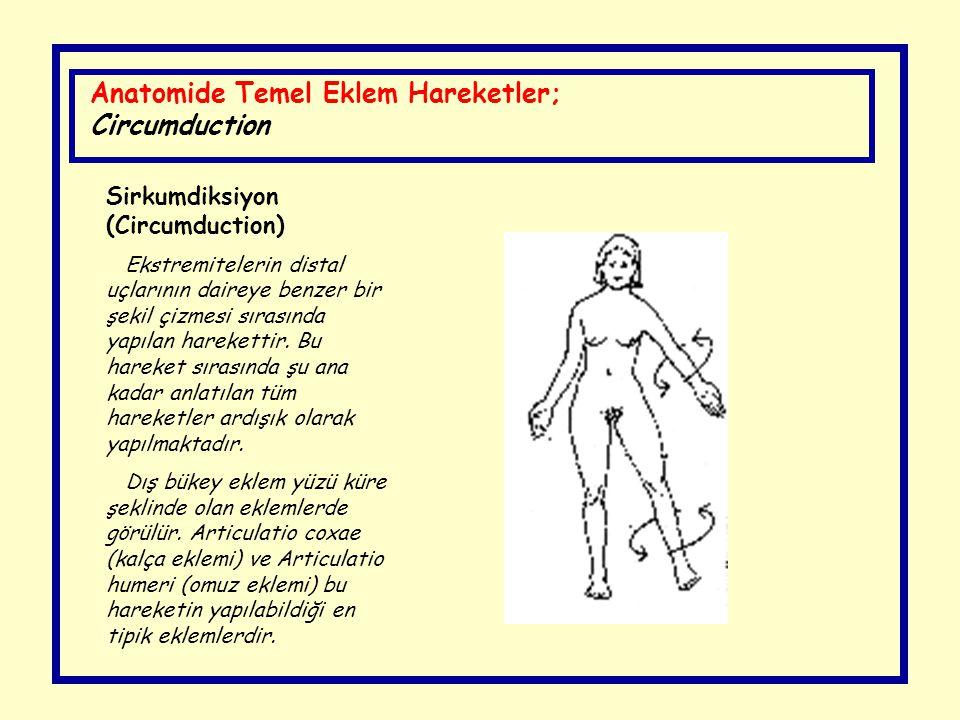 Anatomide Temel Eklem Hareketler; Circumduction