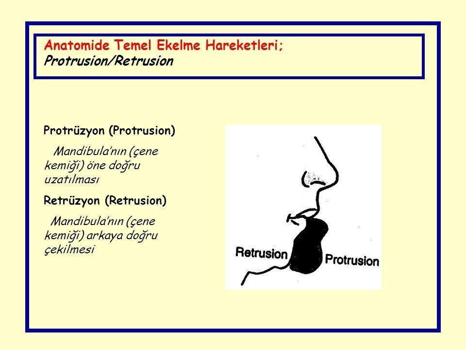 Anatomide Temel Ekelme Hareketleri; Protrusion/Retrusion