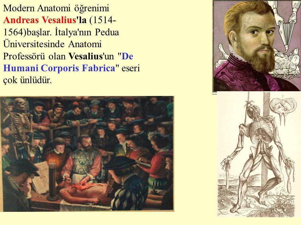 Modern Anatomi öğrenimi Andreas Vesalius la (1514-1564)başlar