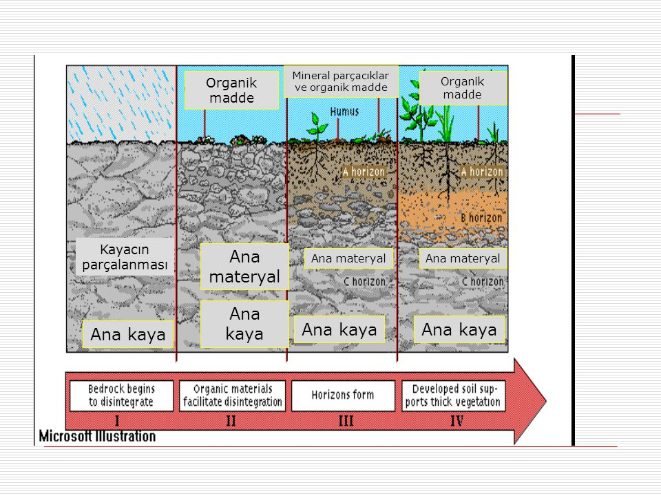 Mineral parçacıklar ve organik madde