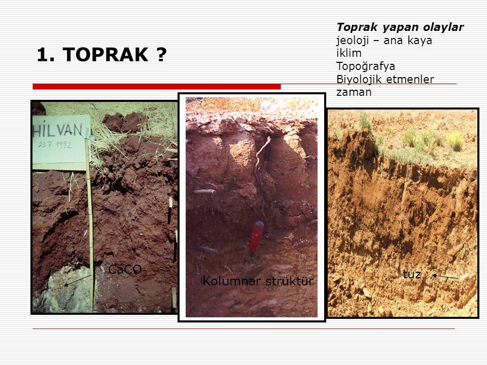1. TOPRAK CaCO3 tuz Kolumnar strüktür Toprak yapan olaylar