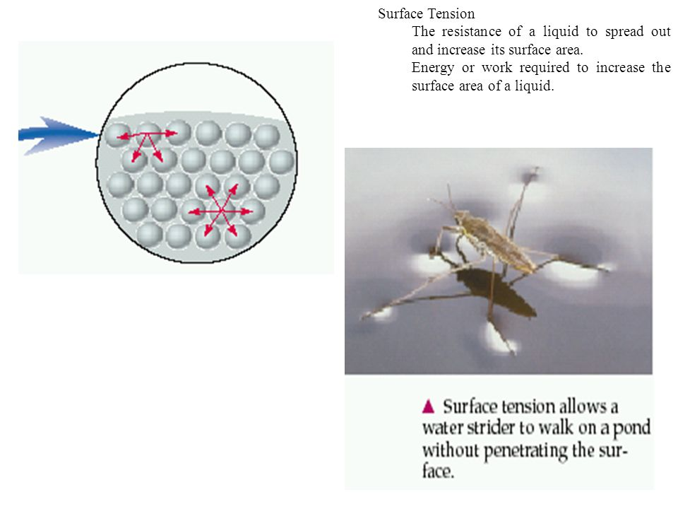 Surface Tension The resistance of a liquid to spread out and increase its surface area.