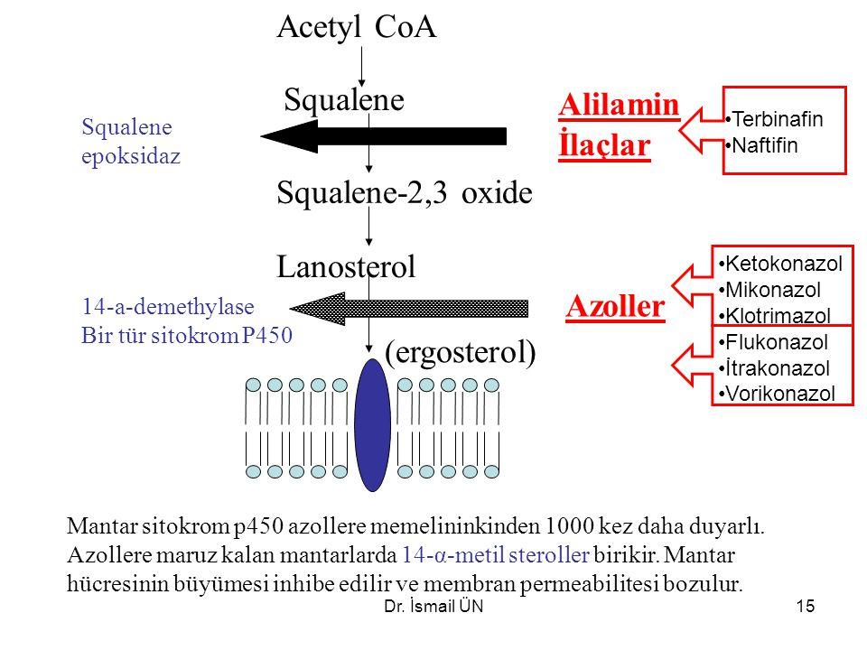 Acetyl CoA Squalene Alilamin İlaçlar Squalene-2,3 oxide Lanosterol