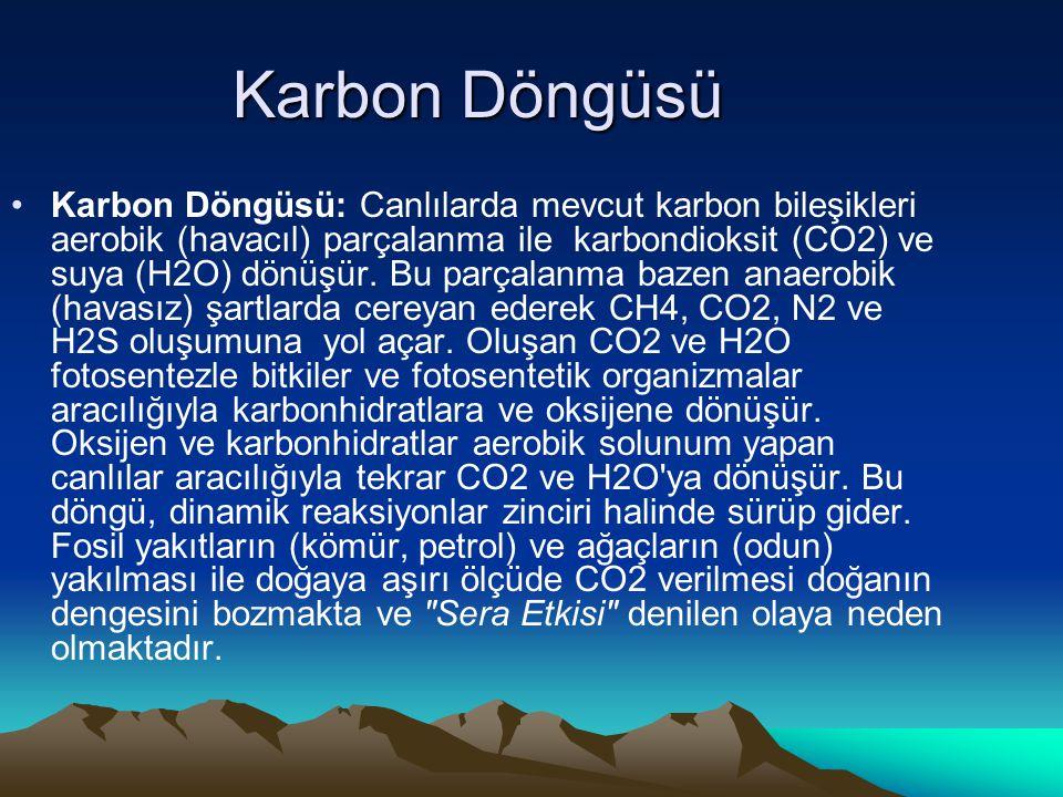 Karbon Döngüsü