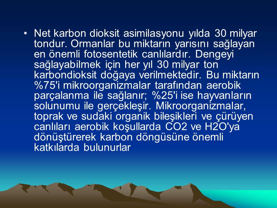 Net karbon dioksit asimilasyonu yılda 30 milyar tondur