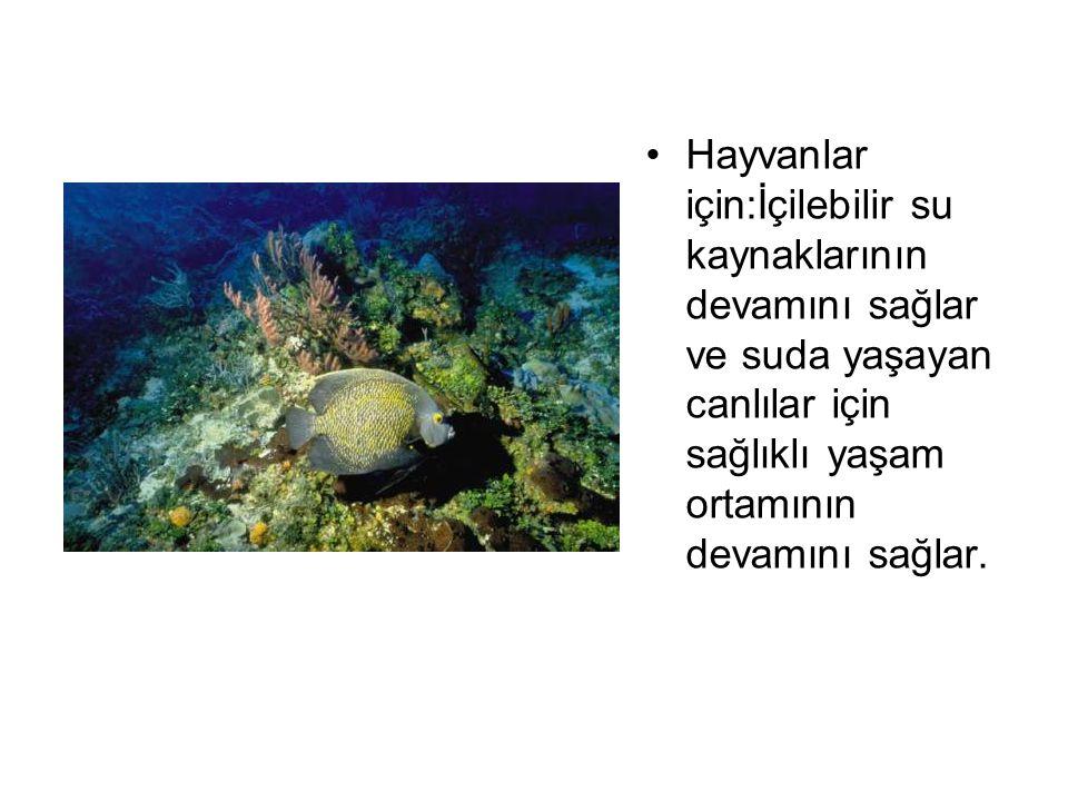 Hayvanlar için:İçilebilir su kaynaklarının devamını sağlar ve suda yaşayan canlılar için sağlıklı yaşam ortamının devamını sağlar.